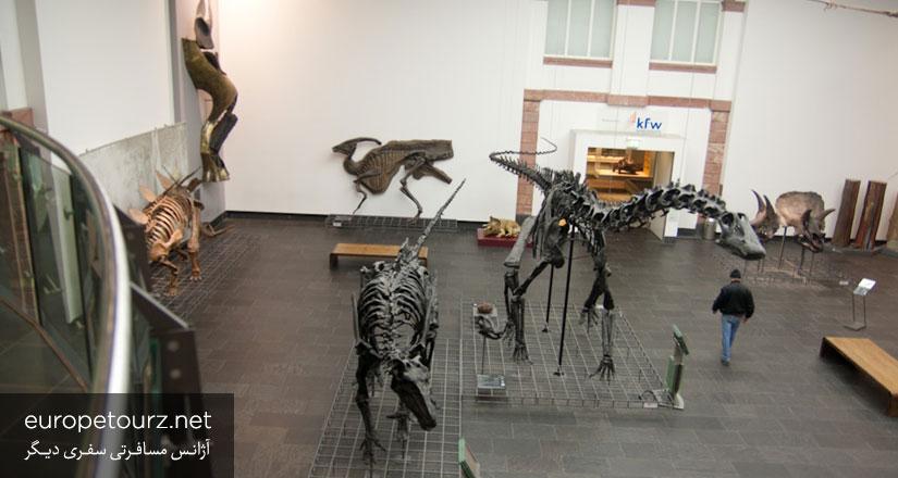 موزه ی تاریخ طبیعی زنکنبرگ - دیدنی های فرانکفورت